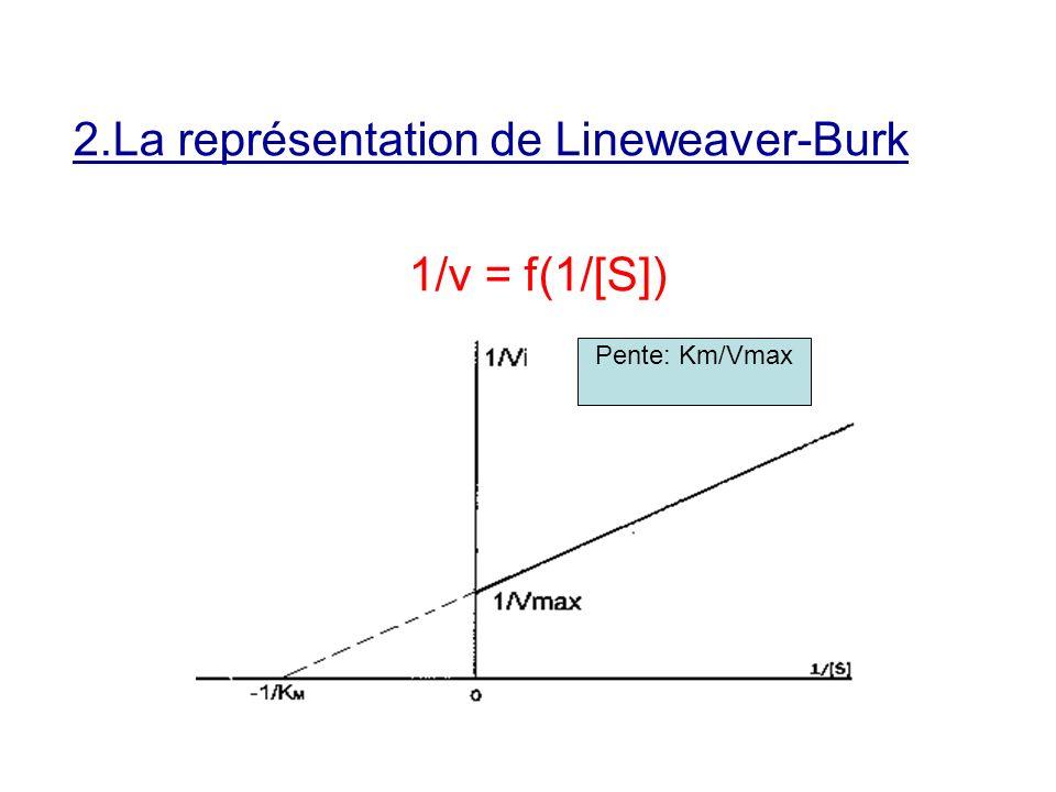 2.La représentation de Lineweaver-Burk 1/v = f(1/[S])